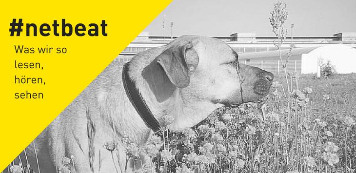 #netbeat 14/17: Wir machen Urlaub. Das sind unsere Empfehlungen für die Zwischenzeit.