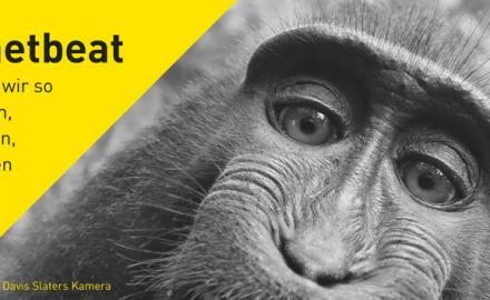 #netbeat 15/17: Dankeschön, Breitbart!